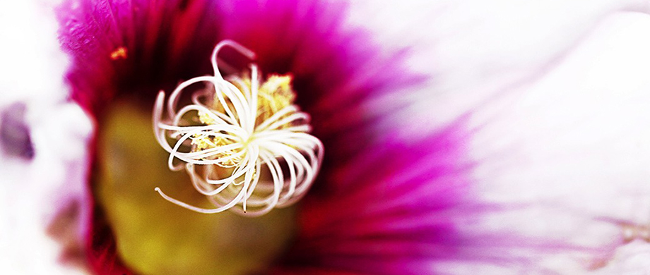 artistic photo of flower by serena pugh